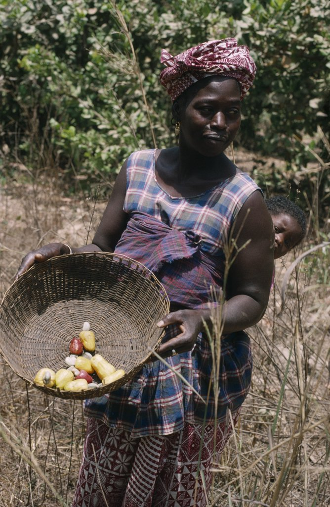 Stock Photo: 1850-16512 Gambia, People, Women, Woman With Baby On Back Holding Basket Of  Cashew Fruit With Nut
