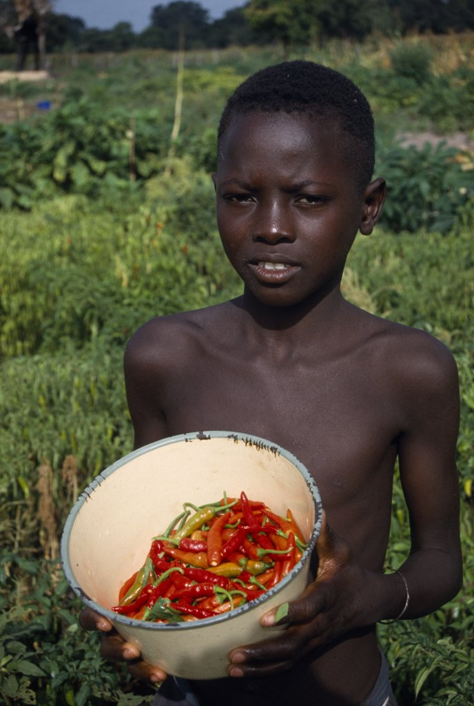 Stock Photo: 1850-16532 Gambia, Agriculture, Boy Holding Bowl Of Chillies