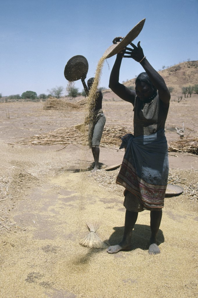 Sudan, South Darfur, Farming, Masalit Women Winnowing Millet.  The Masalit People Primarily Make Their Living Through Agriculture. : Stock Photo