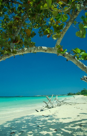 Stock Photo: 1850-1669 West Indies, Jamaica, Negril, Empty Beach With Driftwood Seen Through Branches Of Mangrove Tree
