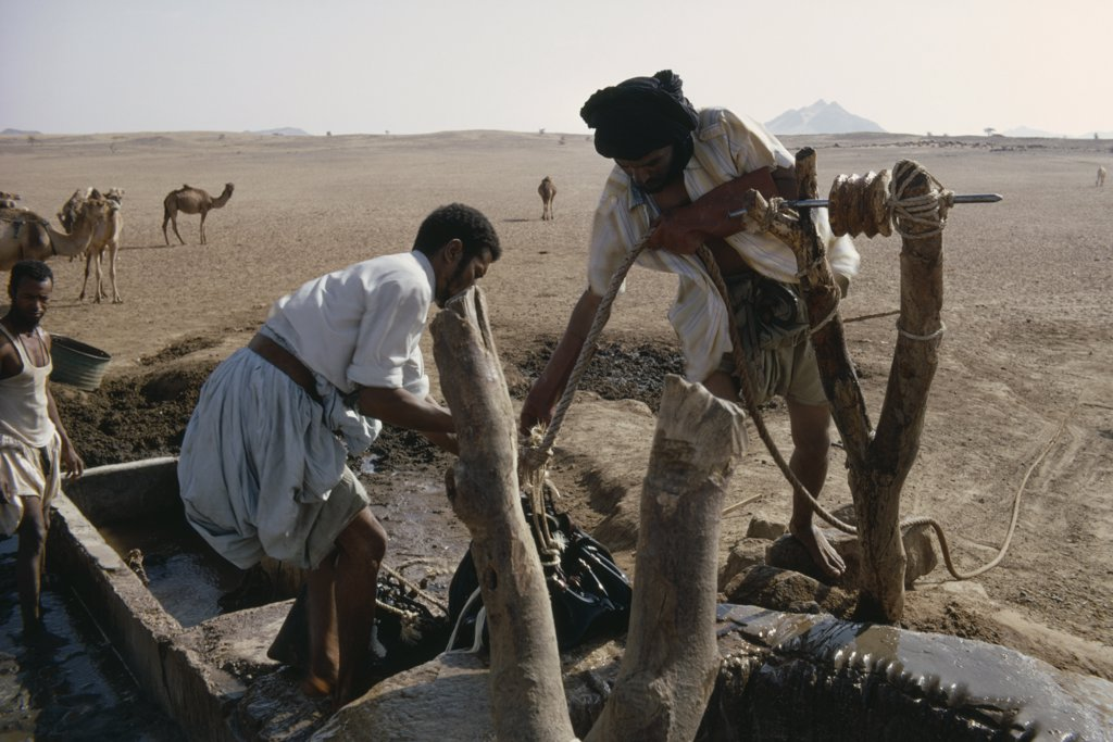 Mauritania, Water, Men Drawing Water From Desert Well With Camels In Background. : Stock Photo