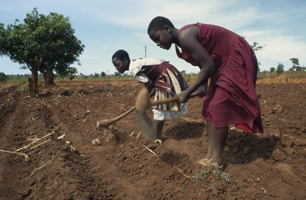 Stock Photo: 1850-17420 Malawi, Farming, Girls Working In Fields Near Lilongwe.  The Soil Is Very Dry Due To The Lateness Of The Rains