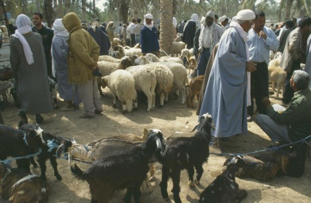 Tunisia, Douz, Sahara, Livestock Market : Stock Photo