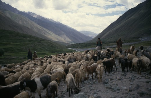 Pakistan, North, Agriculture, Goat Herders In Steep Sided Valley. : Stock Photo