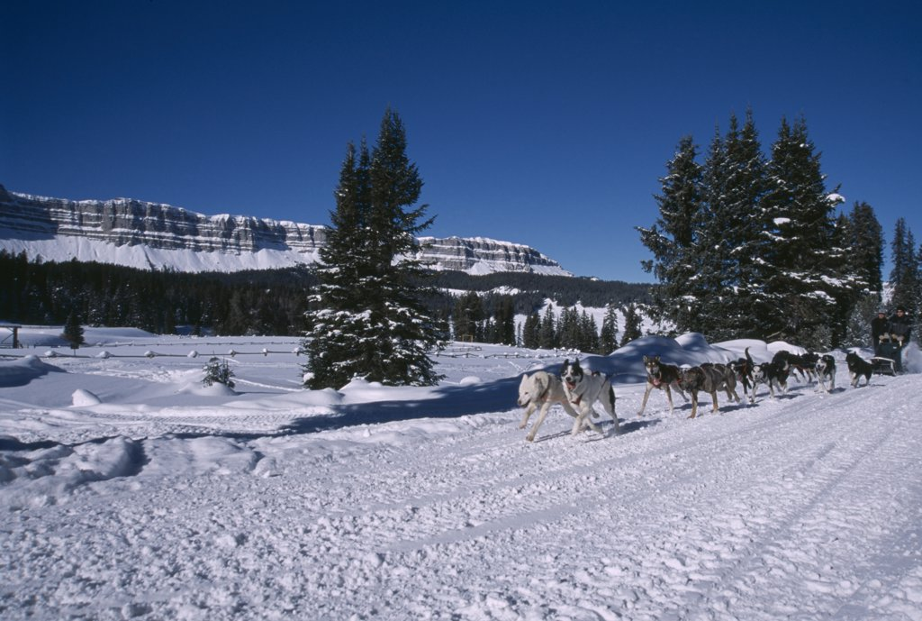 Stock Photo: 1850-17982 Usa, Wyoming, Dubois, Brooks Lake Lodge. Dogsledding With Alaskan Huskies