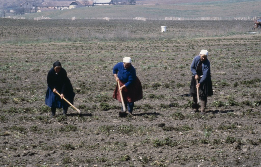 Hungary, N?gr?d, Holl?ko Village, Women Working In The Fields. : Stock Photo