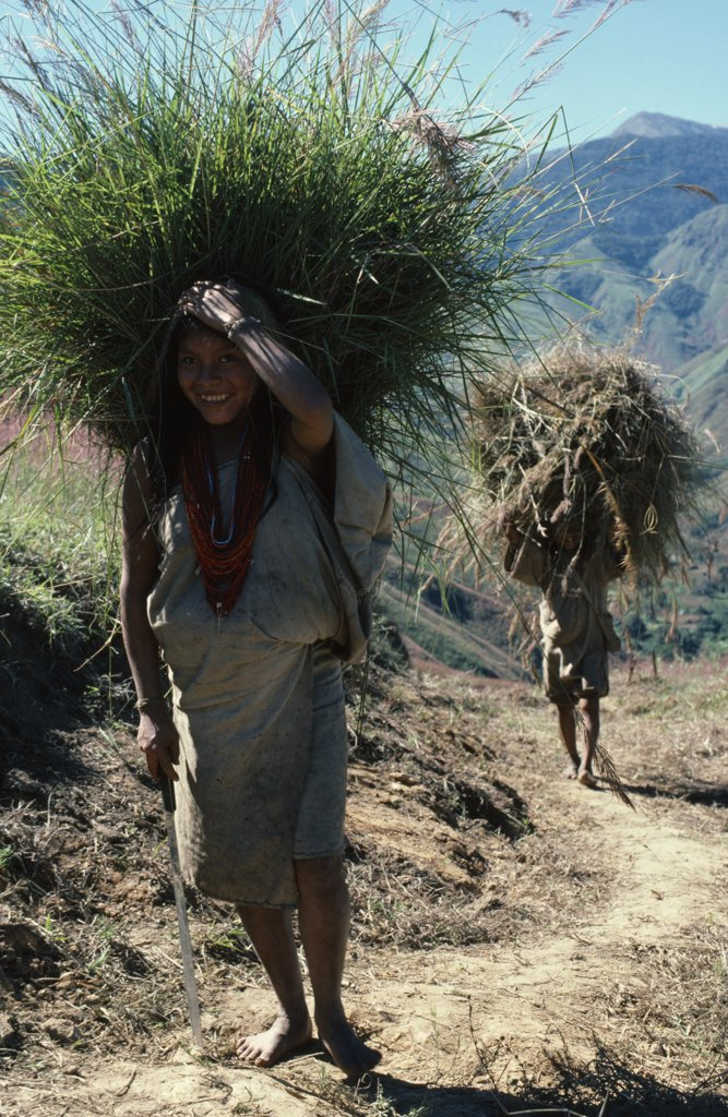 Colombia, Sierra Nevada De Santa Marta, San Antonio, 'Mama Valencia'S Daughter And Young Son Bring Freshly Cut Bundles Of Hay Along Track To San Antonio To Re-Thatch Their Family Home. Lower Slopes Of Sierra Nevada Behind, Denuded By Past Over-Grazing. Kogi Tribe ' : Stock Photo