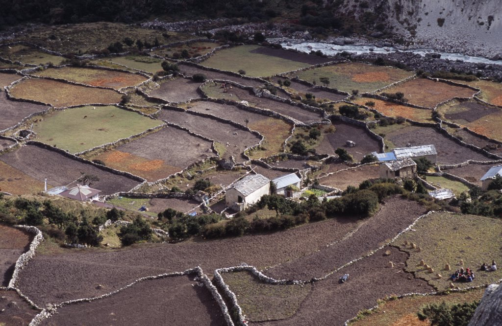Nepal, Khumbu Region, Pangboche, Crops And Lifestock In Patchwork Of Terraced Fields And Sherpa Houses. : Stock Photo