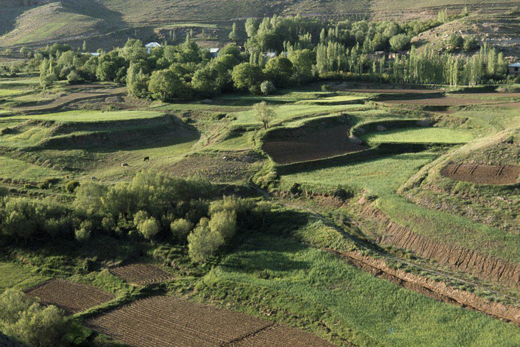 Stock Photo: 1850-20811 Iran, Alborz Mountains, Traditional Irrigated Terraces. Farming