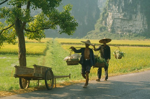 China, Yangshou, Farming, Men Walking On A Road Past  Paddy Fields Carrying Goods On Poles Over Their Shoulders : Stock Photo