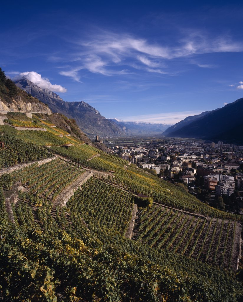 Stock Photo: 1850-21447 Switzerland, Valais, Martigny, Elevated View East Along Rhone Valley Above Vinyards And Town