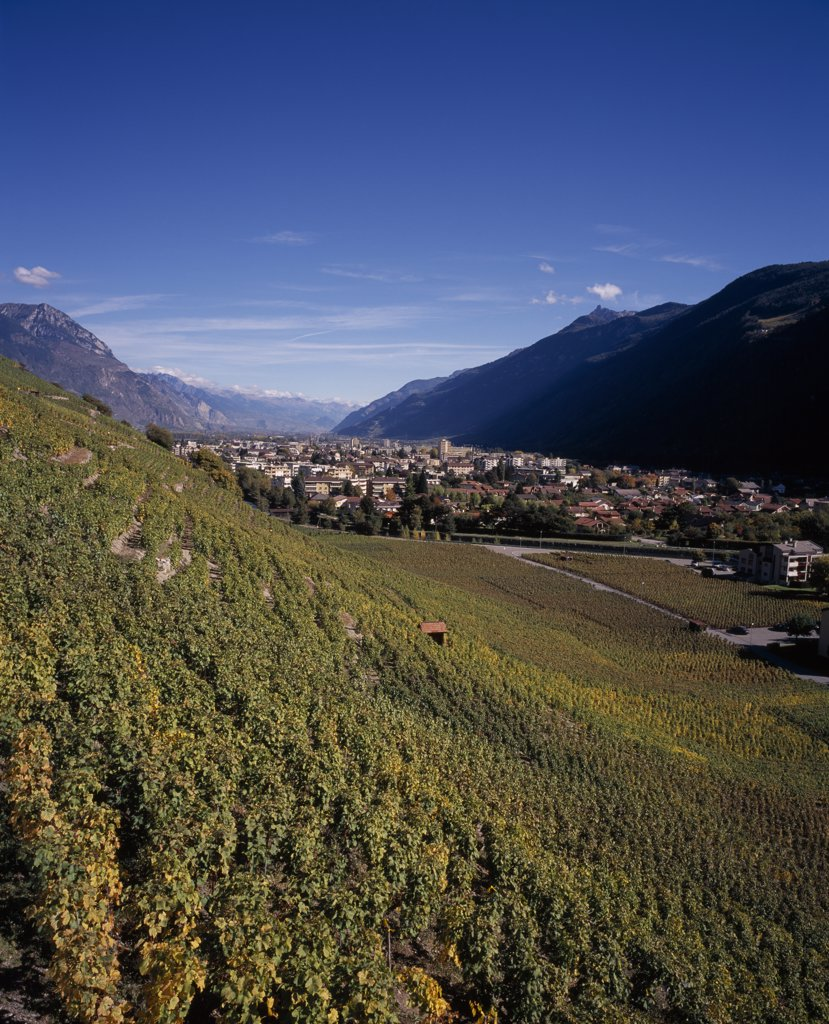 Stock Photo: 1850-21452 Switzerland, Valais, Martigny, Rhone Valley. View Across Vineyards On Slope Towards The Town.
