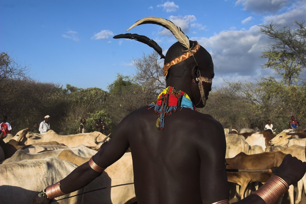 Ethiopia, Lower Omo Valley, Turmi, 'Hama Jumping Of The Bulls Initiation Ceremony, Ritual Dancing Round Cows And Bulls Before The Initiate Does The Jumpin' : Stock Photo