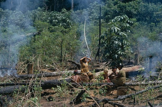 Stock Photo: 1850-22832 Colombia, North West Amazon, Tukano Indigenous People, Barasana Women In Cleared Area Of Rainforest  Chagra/Slash & Burn Cultivation Plot.  Sitting Beside Charred Felled Trees And Stumps With Anthropologist Christine Hugh-Jones.  Tukano Sedentary Indian Tribe North Western Amazonia American Colombian Columbia Ecology Entorno Environmental Environnement Female Woman Girl Lady Green Issues Hispanic Indegent Latin America Latino South America Tukano Farming Agrarian Agricultural Growing Husbandry