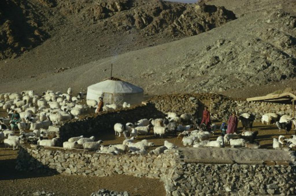 Stock Photo: 1850-22969 Mongolia, Gobi Desert, Khalkha Winter Sheep Camp Of Gers Yurts And Flock Of Sheep  Part Penned Inside Stone Walled Enclosures On Steep  Barren Hillside In Mountain Landscape. Khalha East Asia Asian Mongol Uls Mongolian Scenic