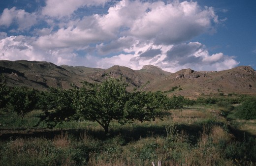 Stock Photo: 1850-23363 Armenia, Vaik Region, Agriculture, Landscape With Apricot Orchard.
