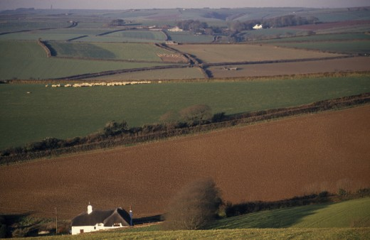 England, Devon, Agriculture, 'Agricultural Landscape And Field Patterns With White Painted, Thatched House In Foreground.  Areas Of Plough, Pasture And Sheep Field Delineated By Hedges.' : Stock Photo