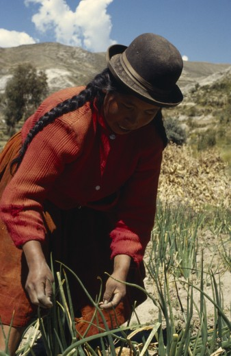 Bolivia, Lake Titicaca, Belen, 'Woman Harvesting Potatoes, Root Vegetables And Onions' : Stock Photo
