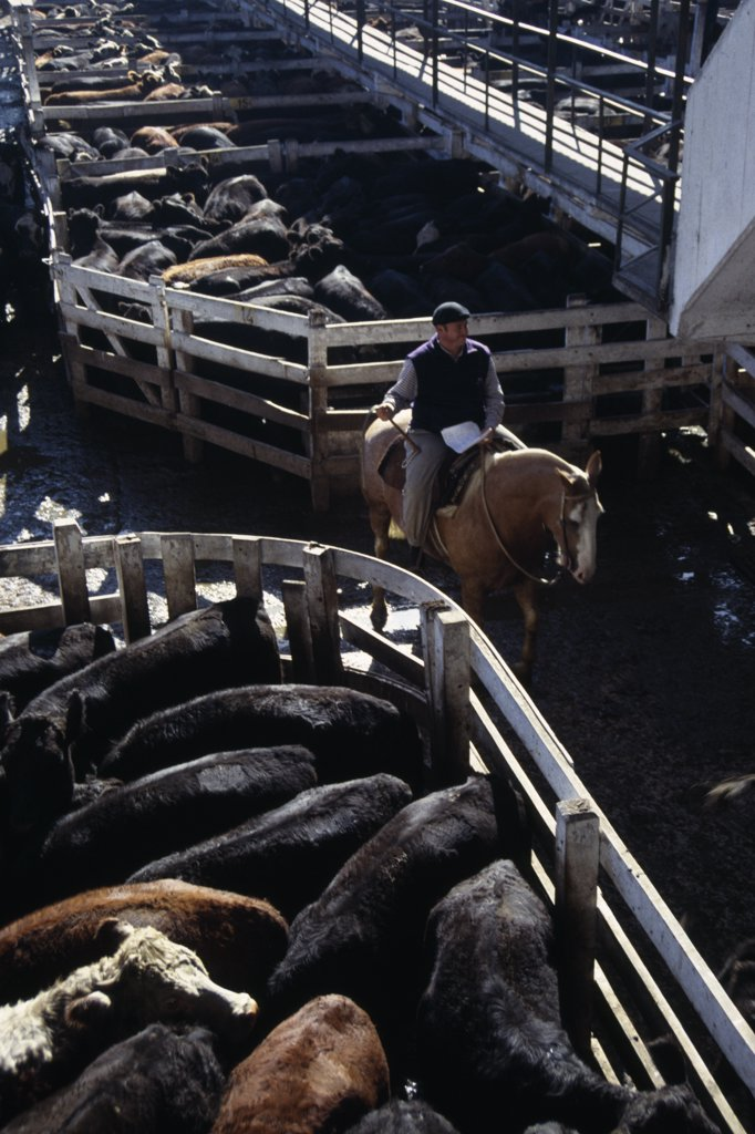 Argentina, Buenos Aires, Man Riding Horse Between Cattle Pens In Huge Cattle Market. : Stock Photo