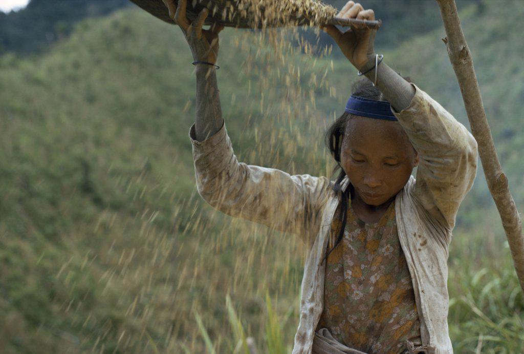 Malaysia, Borneo, Sarawak, Kayan Girl Winnowing Rice. Subgroup Of The Dayak Indigenous Tribes Native To Borneo : Stock Photo