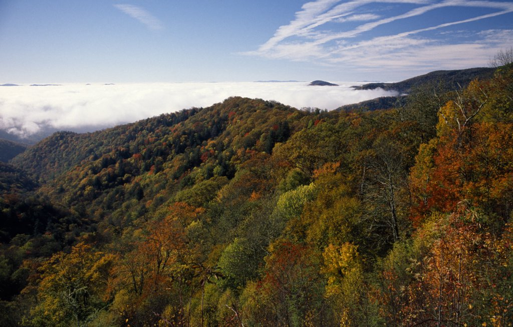 Stock Photo: 1850-26936 Usa, North Carolina, Smoky Mountain , Great Smoky Mountain National Park. View Across Tree Tops In Autumn Colours.