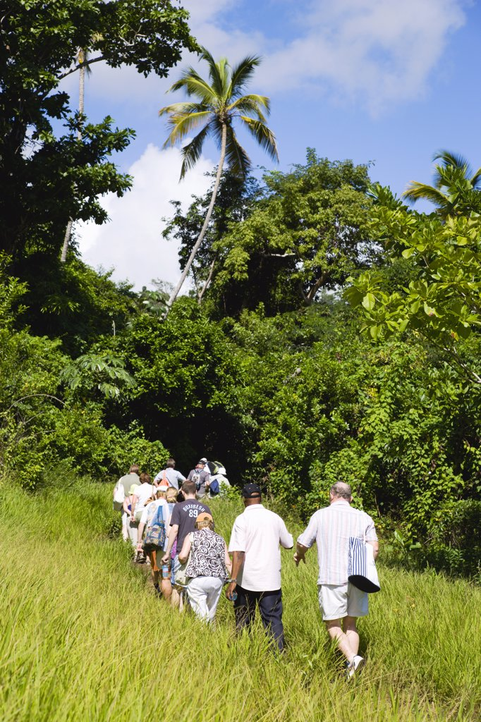 West Indies, Grenada, St Andrew, Cruise Ship Tourists Trekking Through The Jungle Interior Towards Royal Mount Carmel Waterfall. : Stock Photo