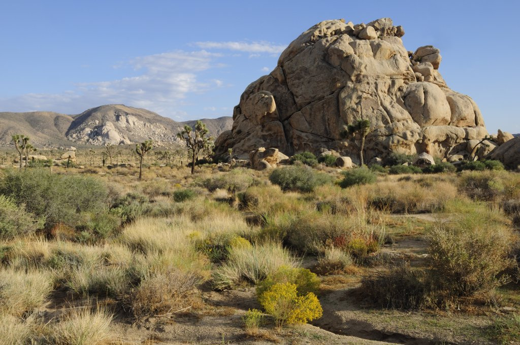 Stock Photo: 1850-27581 Usa, California, Joshua Tree National Park, 'Hidden Valley, Joshua Tree National Park'