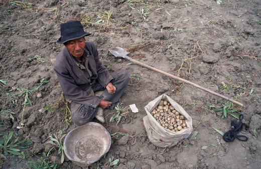 China, Tibet, Tandruk, View Looking Down On A Potato Farmer Sorting Potatoes In A Field : Stock Photo
