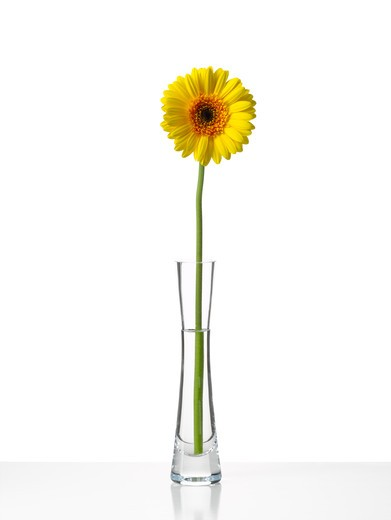 Stock Photo: 1850-35261 Gerbera