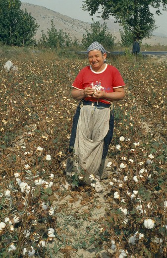 Greece, Industry, Cotton Picking : Stock Photo