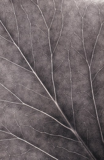 Stock Photo: 1850-37741 Leaf