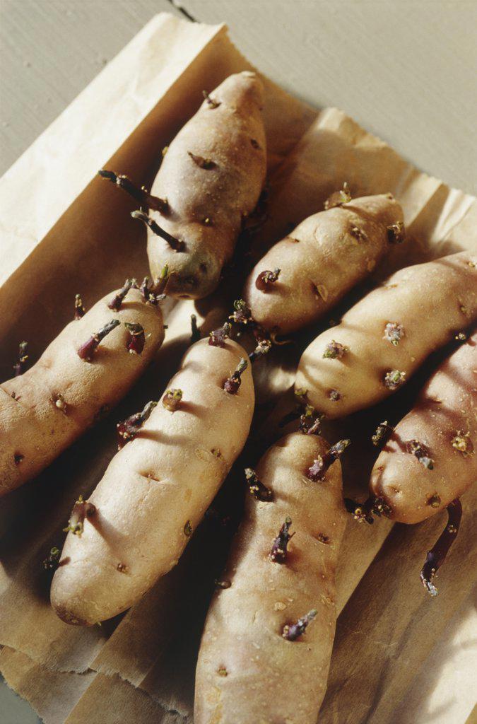 Stock Photo: 1850-41894 Solanum tuberosum, Potato