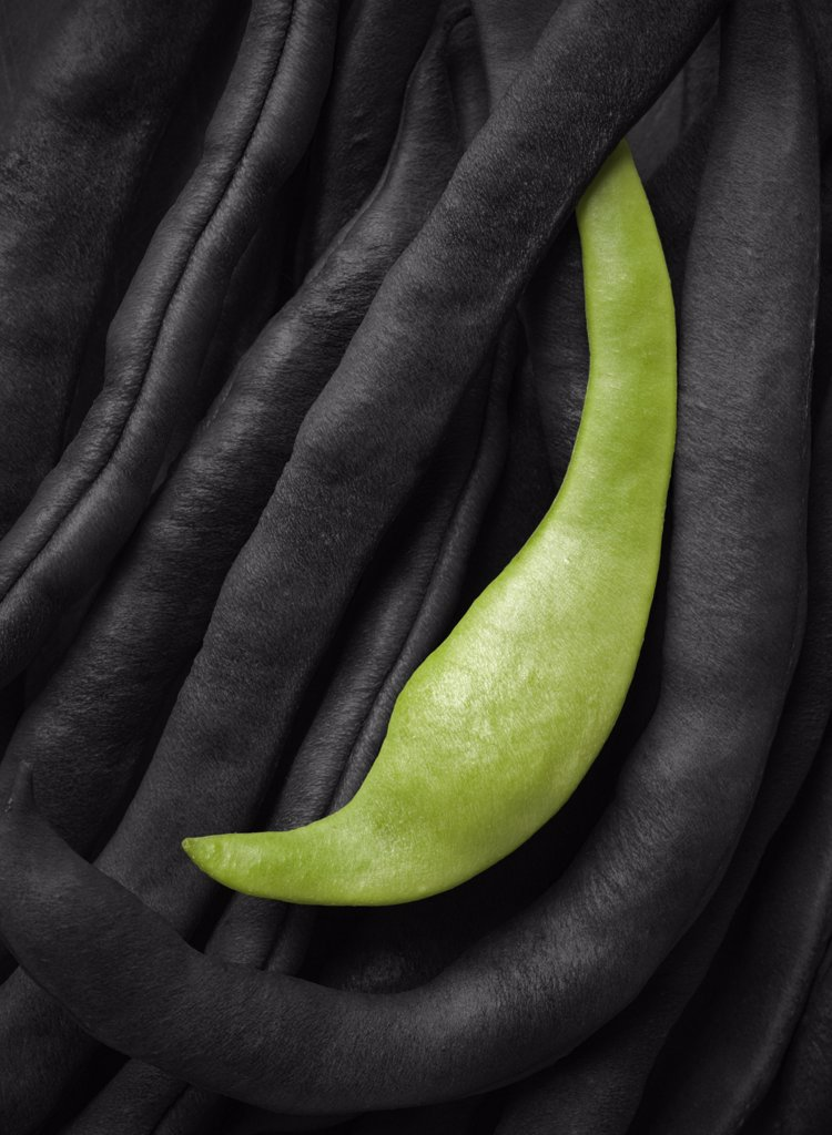 Phaseolus vulgaris 'Neckar Queen', French bean : Stock Photo
