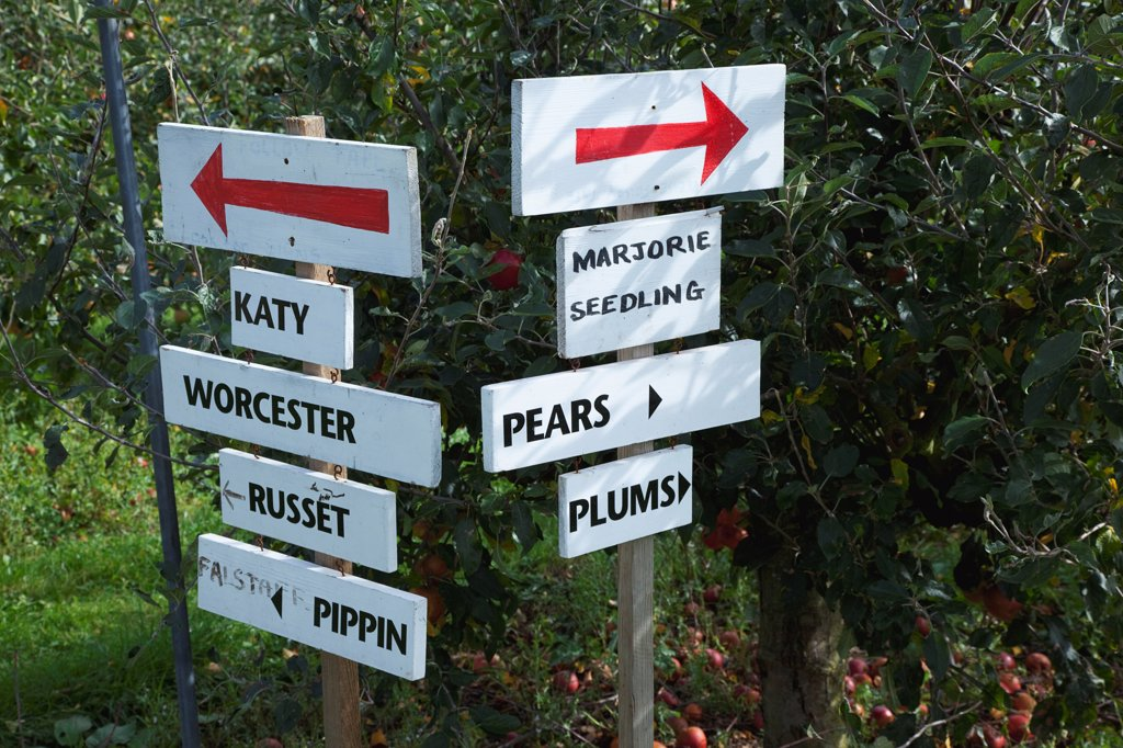Fruit, Orchard, Pick Your Own, signs pointing the way to rows containing different varietes of tree in Grange Farm. : Stock Photo
