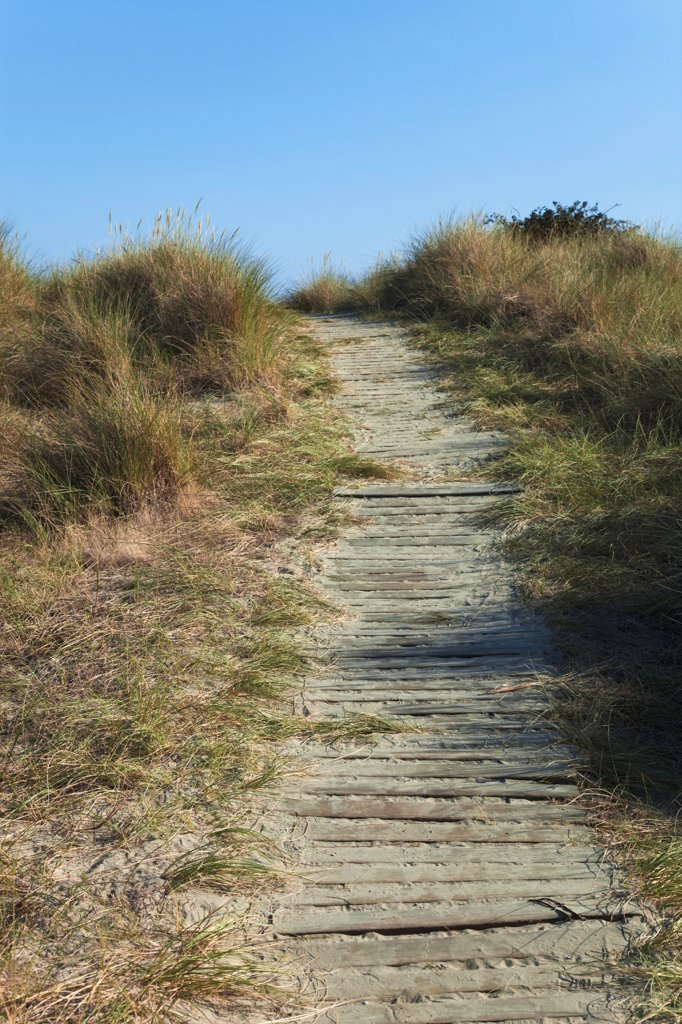 Stock Photo: 1850-45882 England, West Sussex, West Wittering Beach, East Head, Wooden pathway through sand dunes.