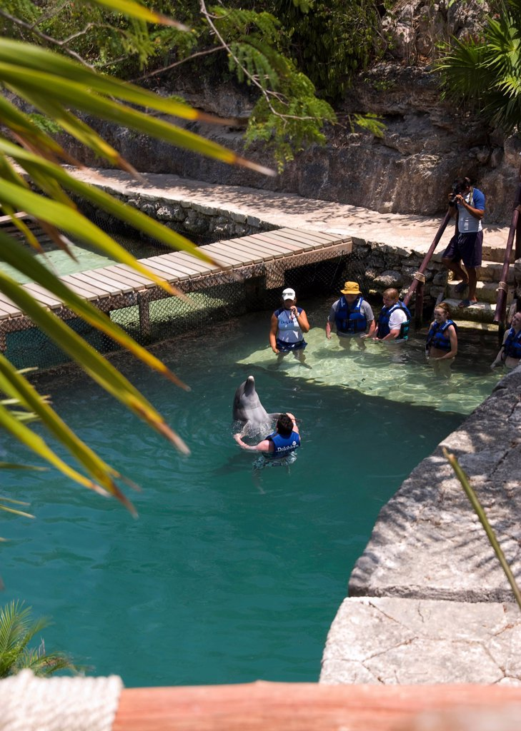 Stock Photo: 1850-46292 Mexico, Quintana Roo, Xcaret, Dolphin petting.