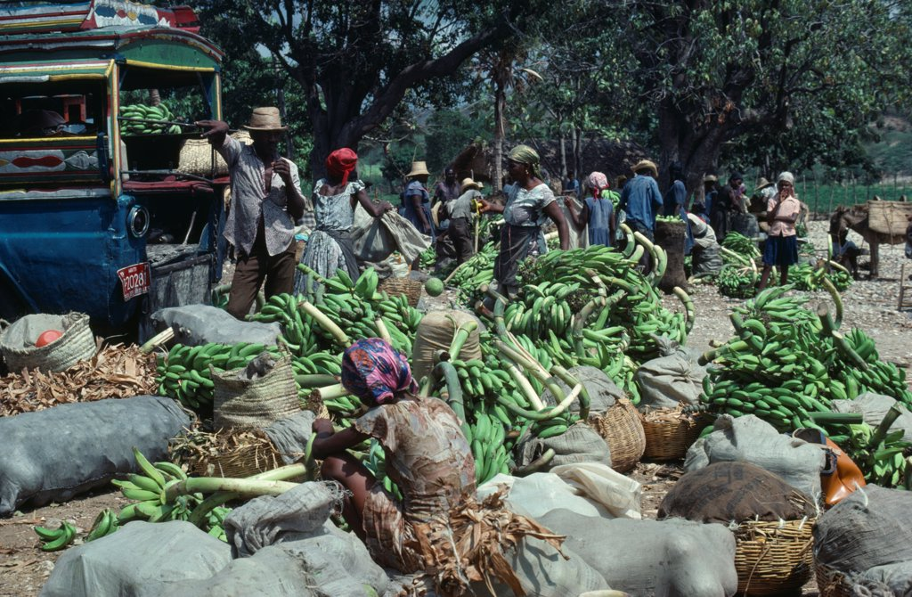 Stock Photo: 1850-46529 Haiti, Markets, Banana vendors in street market.
