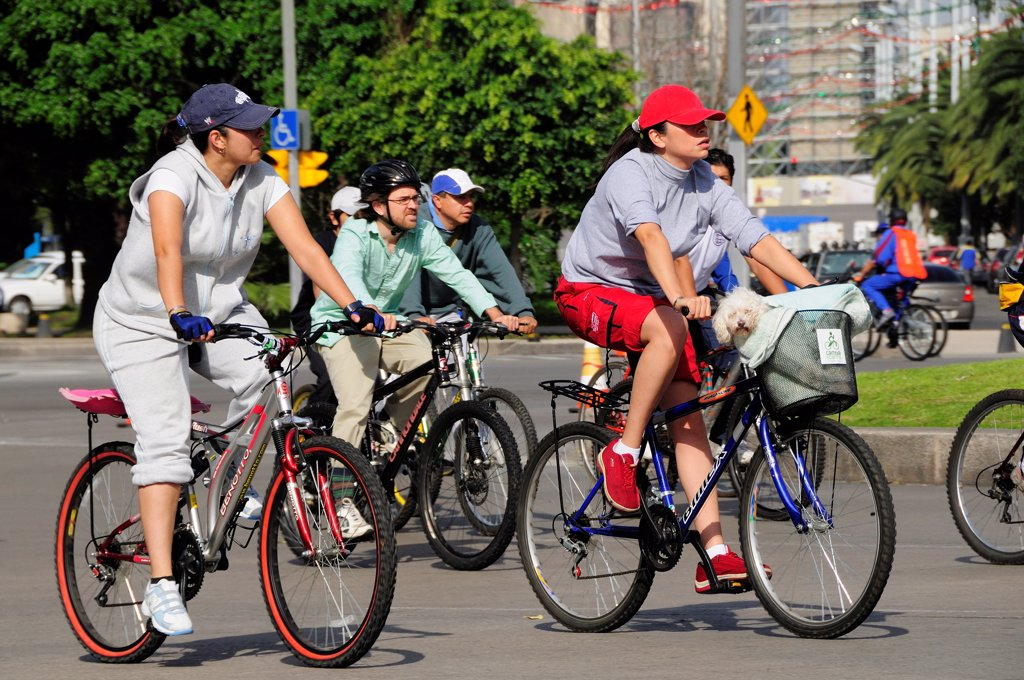 Mexico, Federal District, Mexico City, Cyclists on Reforma one carrying small dog in basket on bicycle handlebars. : Stock Photo