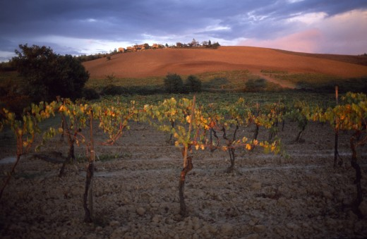 Stock Photo: 1850-5399 Italy, Tuscany, Chianti, Vines At Sunset With A Ploughed Field On The Hillside Behind.