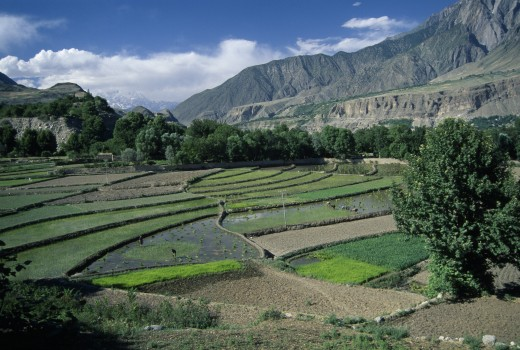 Pakistan, Chitral Valley, Ayun, View Over Rice Terraces : Stock Photo