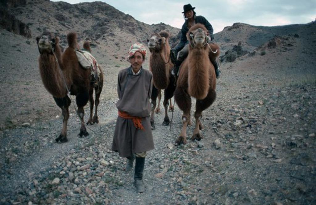 Stock Photo: 1850-7203 Mongolia, Gobi Desert, Herdsmen And Camels