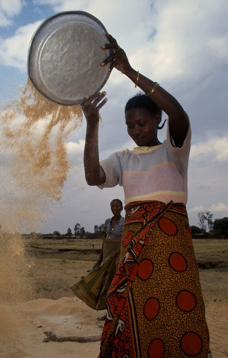 Tanzania, Shinyanga, Gertrude Winnowing Rice Waste She Collects From Mill.  Whole Grains That Slip Through Are Sold And The Broken Grains Eaten. : Stock Photo