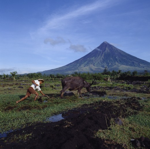 Stock Photo: 1850-766 Philippines, Luzon Island, Legaspi, Man Ploughing With Bullock With The Peak Of The Mayon Volcano Behind.