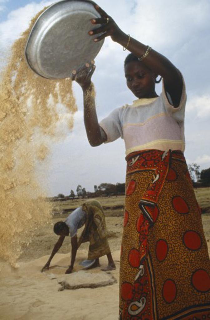 Stock Photo: 1850-7665 Tanzania, Farming, Woman Winnowing Rice.