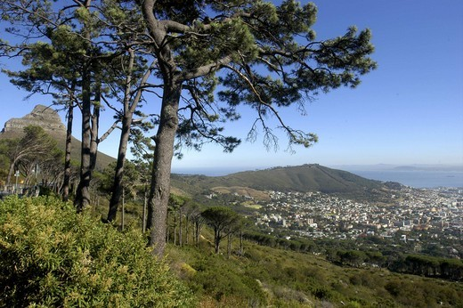 Stock Photo: 1850-8007 South Africa, Western Cape, Cape Town, Aerial View Over The City And Coastline From Hillside