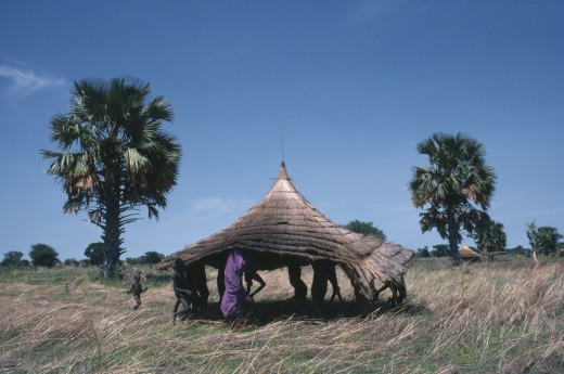 Sudan, Farming, Dinka Tribe Carrying Thatched Roof For Cattle Camp Hut. : Stock Photo