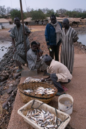 Stock Photo: 1850-9042 Gambia, Industry, Fishing, Fishermen On Gambia River Quayside Selling Freshly Caught Fish