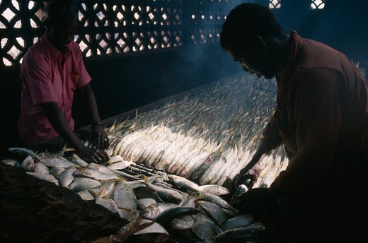 Stock Photo: 1850-9043 Gambia, Industry, Smoking Fish