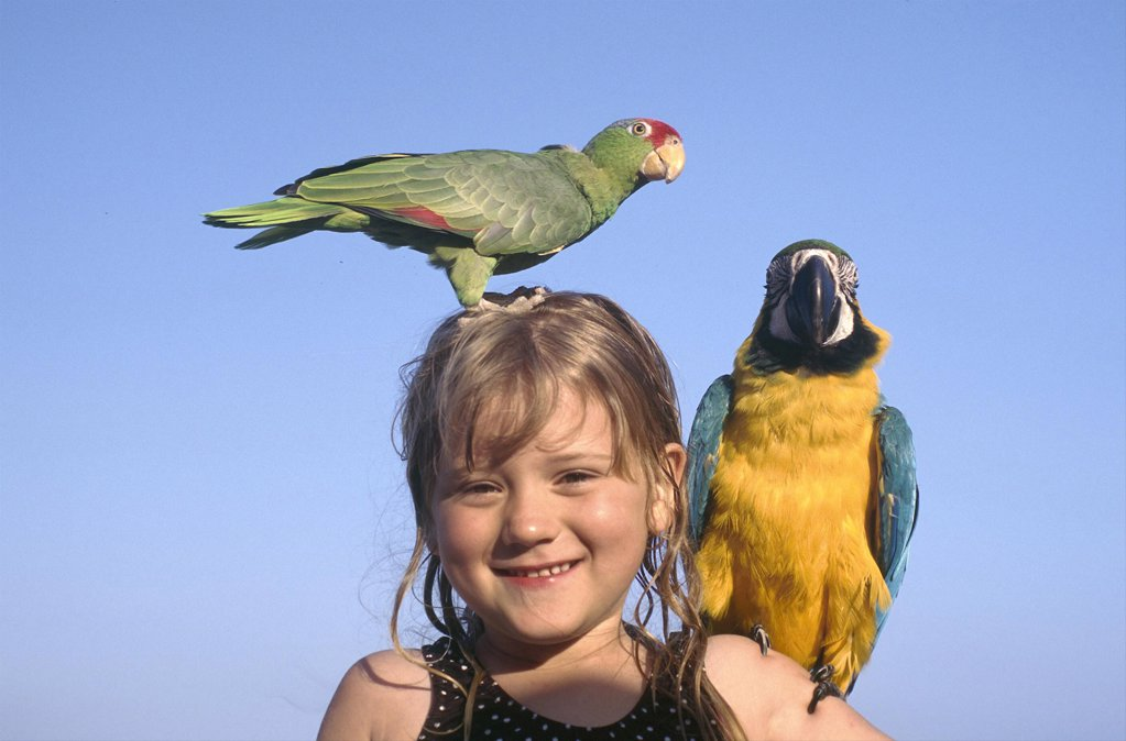Stock Photo: 1850-9113 Usa, Florida, Fort Lauderdale, Portrait Of A Young Girl With Yellow And Blue Parrot On Her Shoulder And A Green And Red Paroquet On Her Head