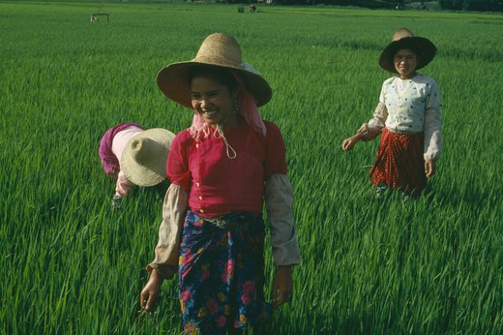 Stock Photo: 1850-952 China, Yunnan, Menghun, Dai Tribe Women Working In Rice Paddy